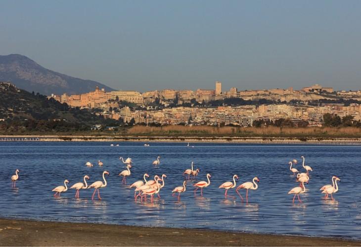 Vedere i fenicotteri rosa in Sardegna